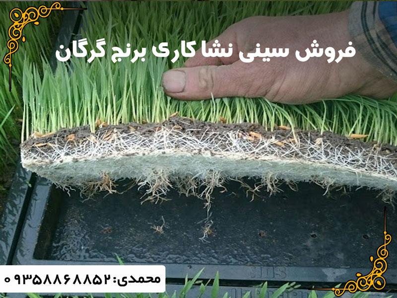 سینی نشا کاری برنج گرگان