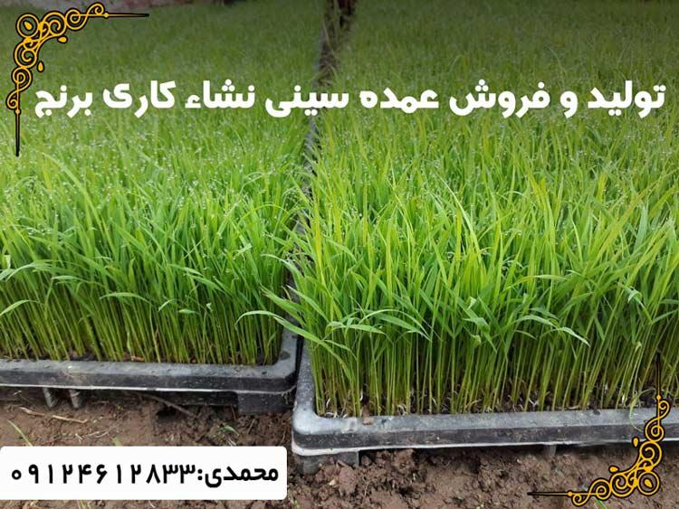 تولید و فروش عمده سینی نشا کاری برنج