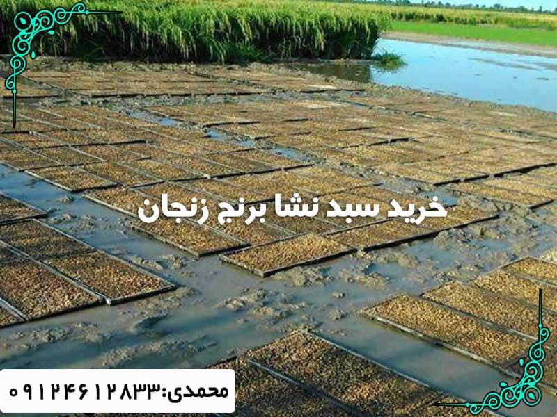 خرید سبد نشا برنج زنجان