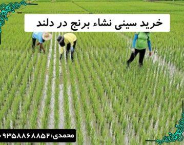 خرید سینی نشاء برنج در دلند