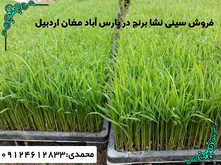 فروش-سینی-نشا-برنج-در-پارس-آباد-مغان-اردبیل