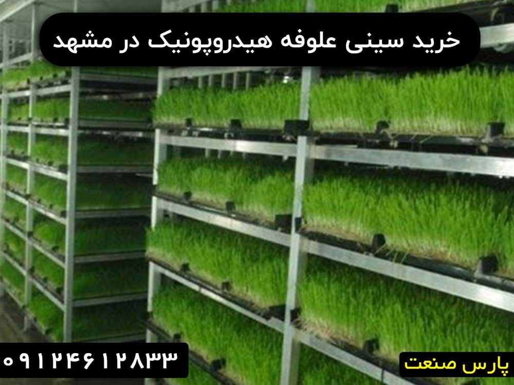 خرید سینی علوفه هیدروپونیک در مشهد